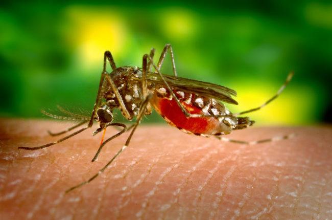 ზაფხულში, ზიკას ვირუსის საფრთხე საქართველოსაც ემუქრება