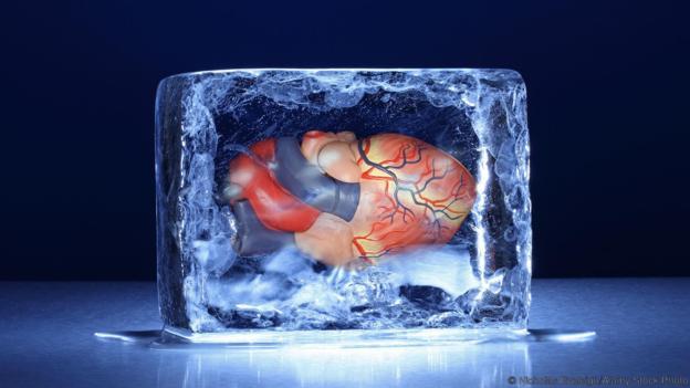 ადამიანის ორგანოები დაზიანების გარეშე გაყინეს და გაალღვეს