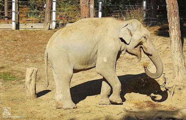 """თბილისის ზოოპარკის სპილო """"ბი-ბი-სის"""" (BBC) სერიალის გმირი გახდება"""