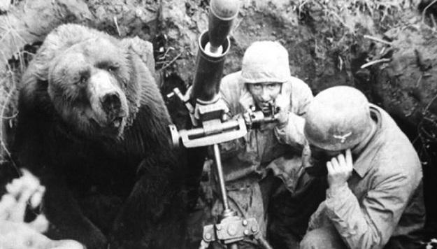 დათვი ვოჟტეკი, რომელიც ჰიტლერის ნაცისტურ არმიას ებრძოდა