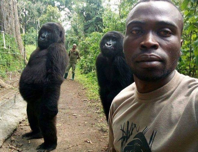 ორმა გორილამ, კონგოდან, სელფის გადაღება ისწავლა