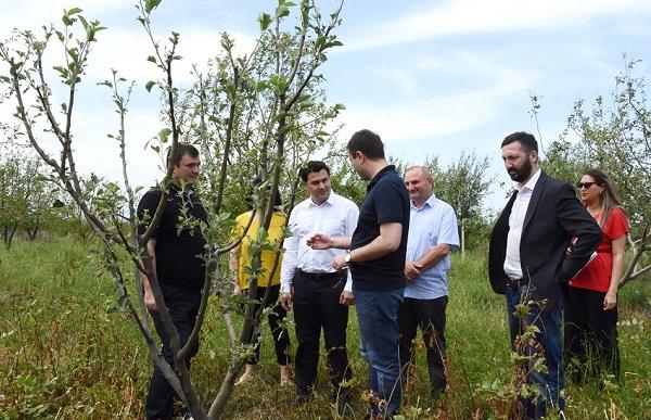 აგროდაზღვევის პროგრამით მოსარგებლე შიდა ქართლელ ფერმერებს მიყენებული ზარალი აუნაზღაურდებათ