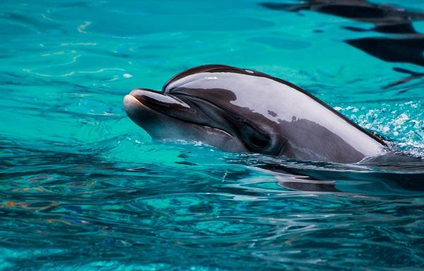 კალიფორნიის სანაპიროსთან ასობით დელფინი გამოჩნდა | ვიდეო
