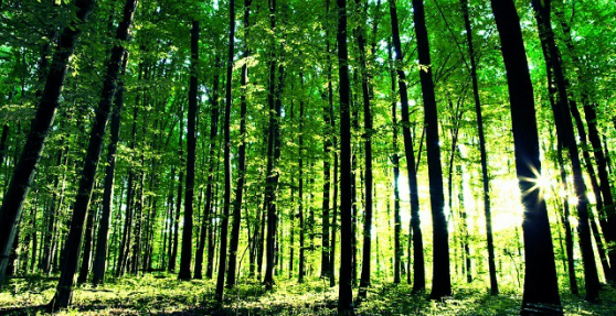 თბილისში ხელოვნური ტყის ბუნებრივად გარდაქმნისთვის საჭირო ღონისძიებების განხორციელებისათვის გრანტის სახით  159 400 ლარი გამოიყოფა
