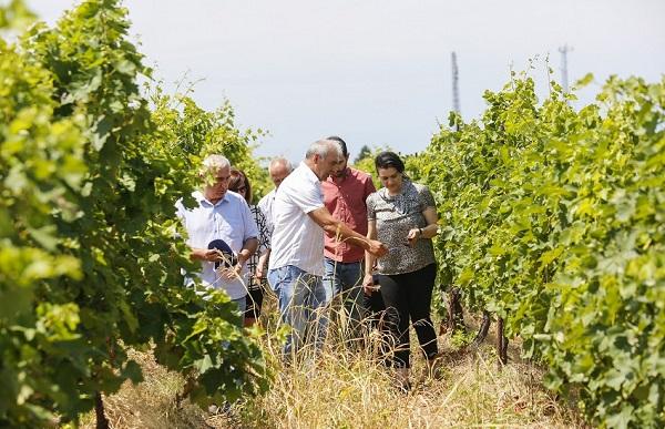კახეთის რეგიონში აგროდაზღვევის პროგრამით მოსარგებლე ფერმერებს მიყენებული ზარალი აუნაზღაურდებათ