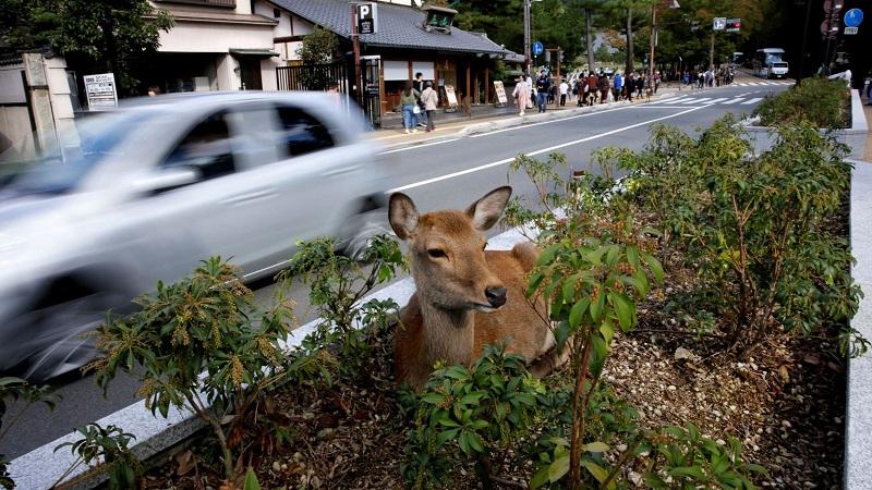 იაპონიაში, დაღუპული ირმის კუჭში 4,3 კგ პლასტმასი აღმოაჩინეს