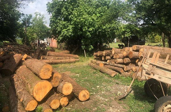 ჩხოროწყუში ხე-ტყის უკანონო ჭრის ფაქტი გამოვლინდა