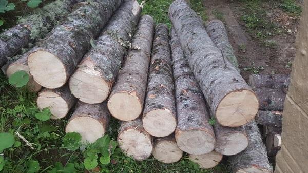 1-ელი ივლისიდან 31 ივლისის ჩათვლით, ხე-ტყის უკანონო მოპოვებისა და ტრანსპორტირების 251 ფაქტი გამოვლინდა