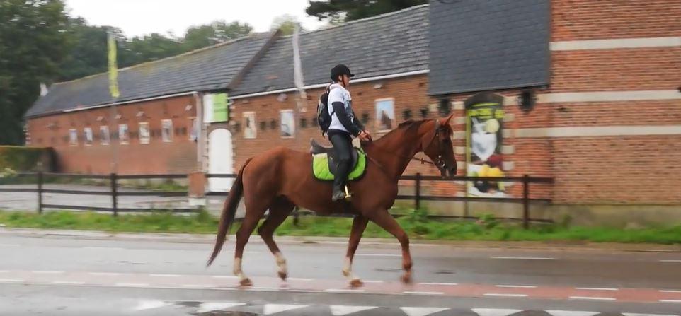 ვიდეო: ბელგიაში გოგონა სკოლაში ცხენით მივიდა, რადგან მეათედ, ავტობუსმა სახლში არ მიაკითხა
