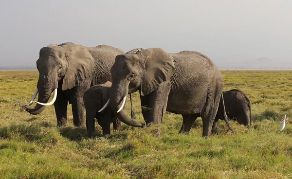ზიმბაბვეს ეროვნულ პარკში შიმშილისგან სულ მცირე 55 სპილო მოკვდა