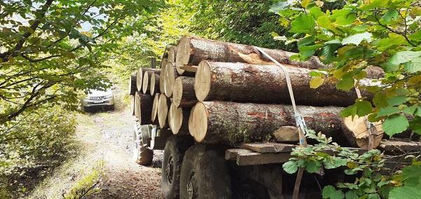 1-ელი სექტემბრიდან 30 სექტემბრის ჩათვლით, ხე-ტყის უკანონო მოპოვებისა და ტრანსპორტირების 261 ფაქტი გამოვლინდა