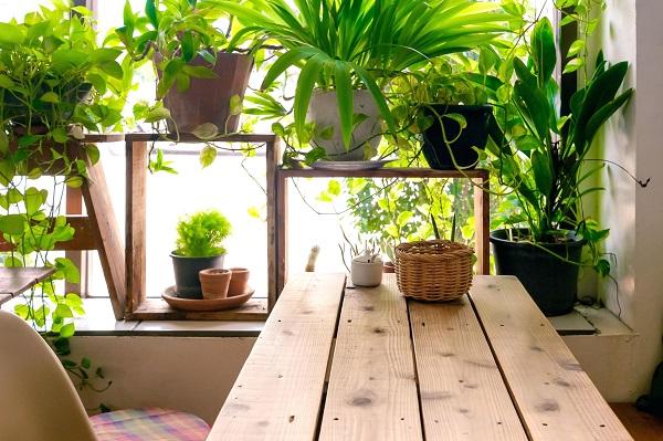 რომელი მცენარეები გამოყოფენ ოთახში ყველაზე მეტ ჟანგბადს?