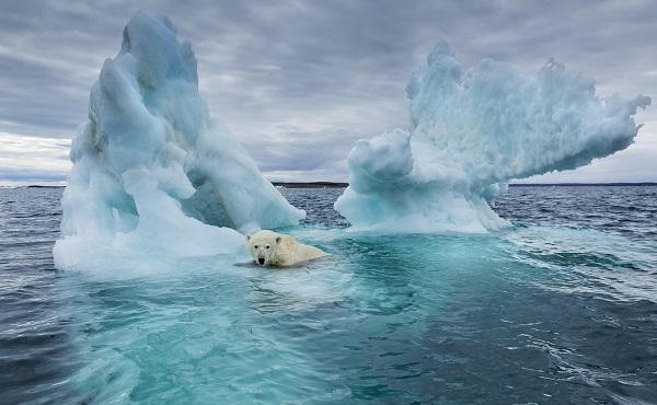 11 000 მეცნიერი აწერს ხელს წერილს კლიმატურ კრიზისსა და საგანგებო ვითარებაზე