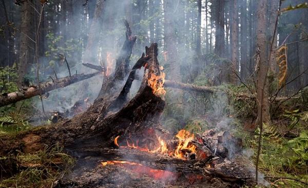 ერთ კვირაზე მეტია აფხაზეთის ტყეებში ხანძარი მძვინვარებს