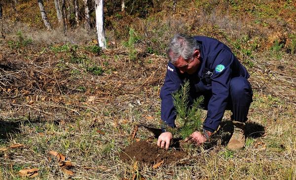 დაბა წაღვერში ნახანძრალი ტყის აღდგენის პროექტი მიმდინარეობს