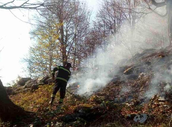 მარტვილის მუნიციპალიტეტში, სოფელ სალხინოს მიმდებარედ, ტყე იწვის