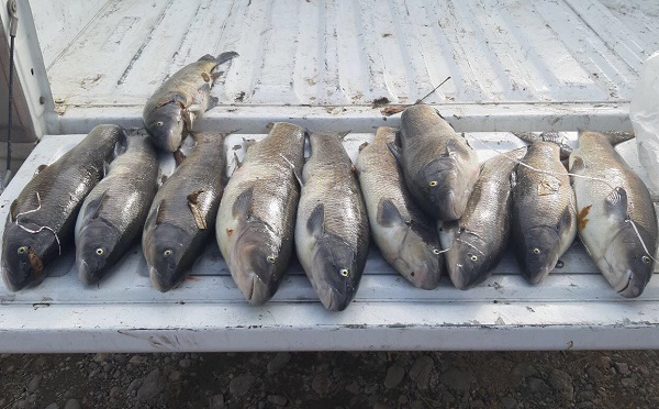 სამი მოქალაქე ასაფეთქებელი ნივთიერებით თევზაობდა - უკანონო თევზჭერა ბოლნისში