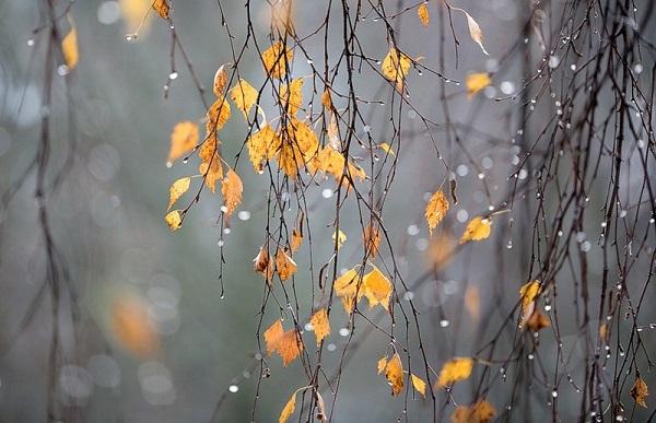 თბილისში 17 იანვარს ცივი, ღრუბლიანი ამინდი შენარჩუნდება