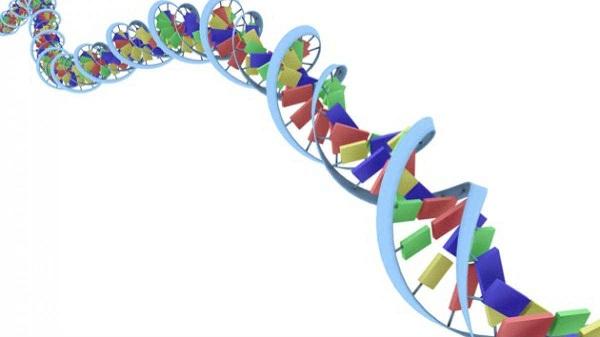 ბათუმში აღმოჩენილი 150 ნეშტიდან 22-ს დნმ ვერ აუღეს