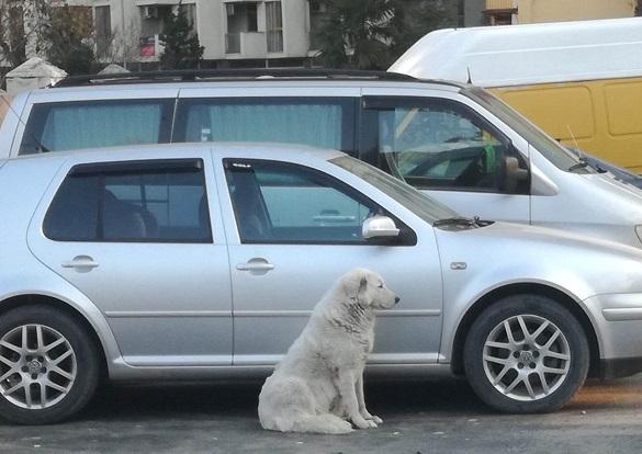 ბათუმში ძაღლი 4 დღეა სავარაუდოდ პატრონს ელოდება - თანამედროვე ჰაჩიკო