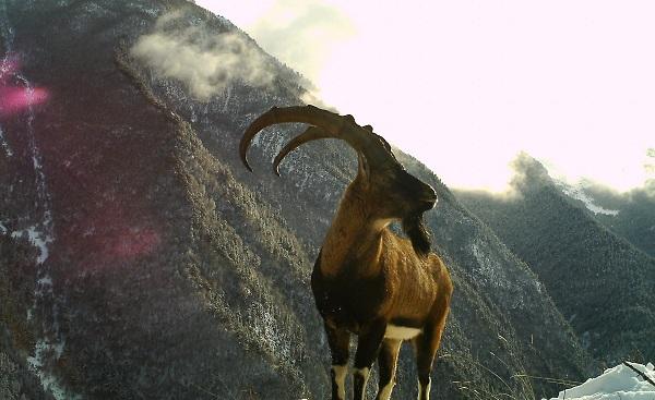 დღის ფოტო: ნიამორი ფშავ-ხევსურეთის ეროვნული პარკიდან