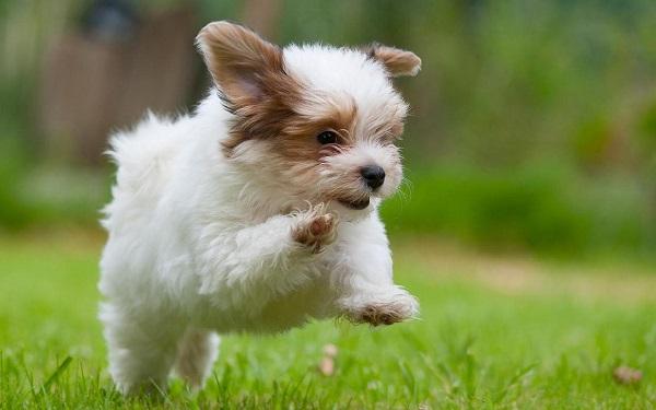ძაღლის ყოლა ნაადრევი სიკვდილის რისკს ამცირებს
