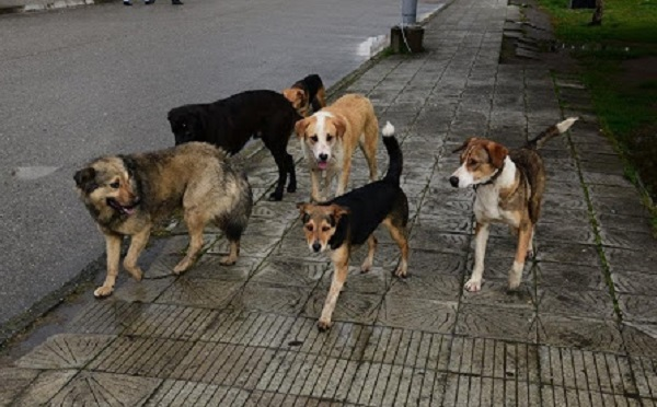 """""""ზოომარტი"""" მერიას მიუსაფარი ძაღლების გამოსაკვებად 5 ტონა საკვებს გადაცემს"""