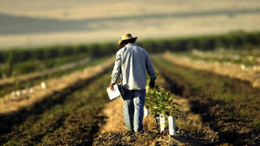 გამოკითხული ფერმერების 43%-ი მიიჩნევს, რომ ვირუსის გაზრდილი რისკების გამო მუშახელის გაძვირება არ მომხდარა