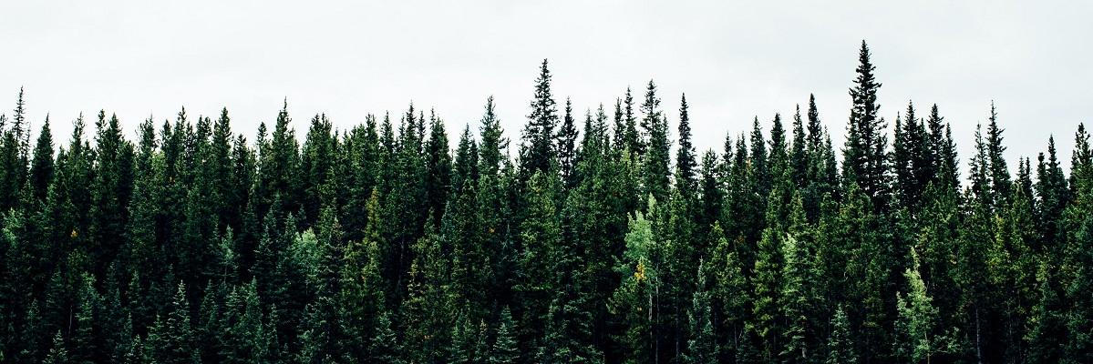 ყველა ტყეს თავისი კატეგორია ექნება მინიჭებული - რეზო გეთიაშვილი