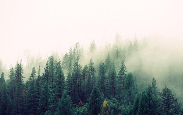 საპატრიარქოსთვის ტყის გადაცემის წინააღმდეგ პეტიცია შეიქმნა