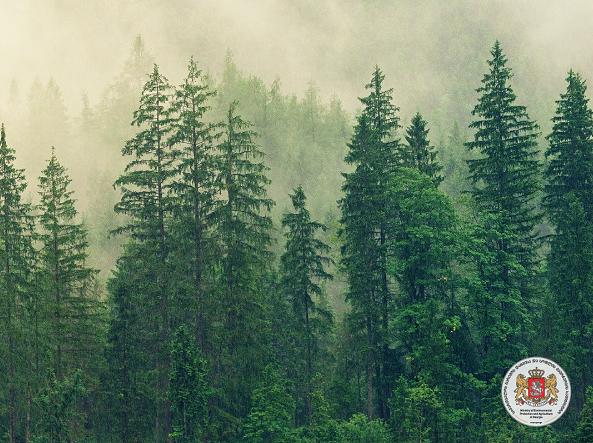გარემოს დაცვისა და ბუნებრივი რესურსების კომიტეტის სხდომაზე, ნინო თანდილაშვილმა ტყის ახალი კოდექსი მესამე მოსმენით განსახილველად წარადგინა
