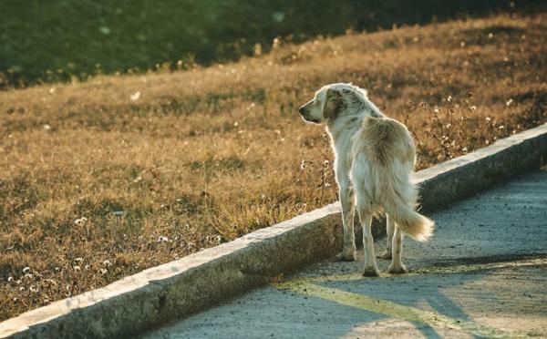 ძაღლისგან დაკბენის 15 შემთხვევა ახალციხეში - ყველა დაზარალებული არასრულწლოვანია