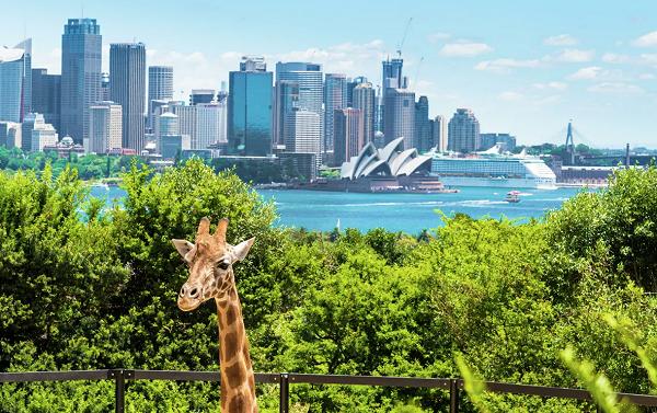 ავსტრალია ტურისტების მიღებას 2021 წლამდე არ გეგმავს