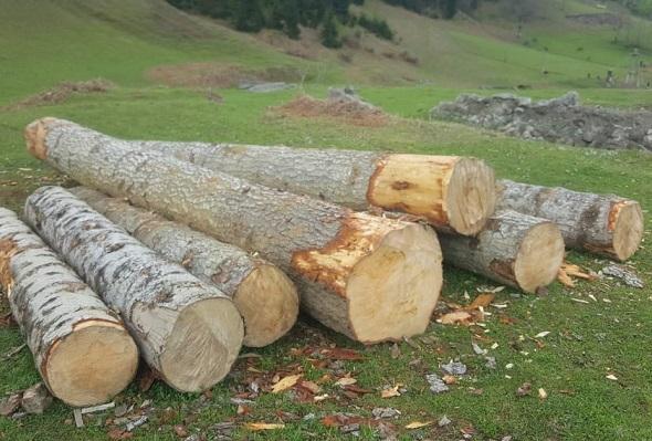 მაისში უკანონო ტყითსარგებლობის 155 ფაქტი გამოვლინდა