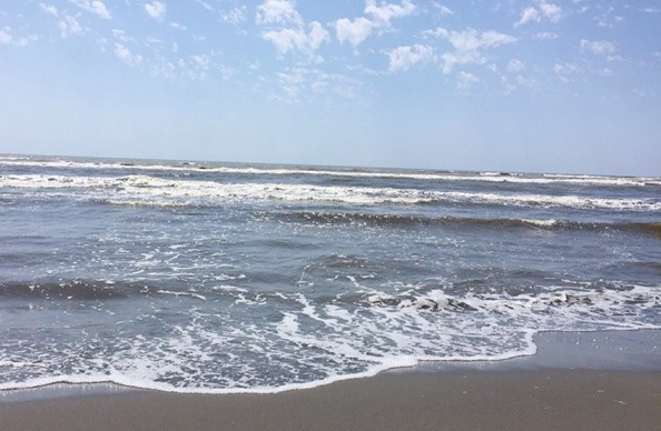 დღეის მდგომარეობით, შავი ზღვის სანაპირო ზოლში წყალმცენარეები აღარ ფიქსირდება, ზღვის წყლის სინჯებში მიკრობიოლოგიური კომპონენტები ნორმას არ აჭრაბებს