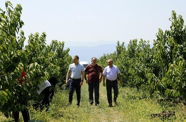 სახელმწიფოს მხარდაჭერით  გაშენებულ ბაღში ფერმერებმა პირველი მოსავალი მიიღეს