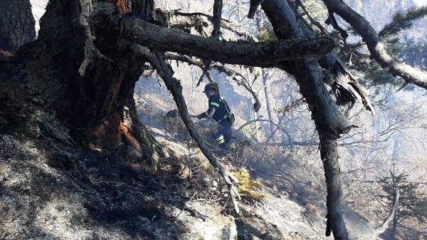 სოფელი ლატალის მიმდებარე ტყეში გაჩენილი ხანძრის სალიკვიდაციო სამუშაოებში სასაზღვრო პოლიციის ვერტმფრენი ჩაერთო