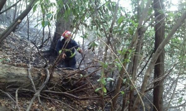 მეხანძრე-მაშველებმა დღეს ტყის და მინდვრის ხანძრის 5 კერის ლიკვიდაცია შეძლეს