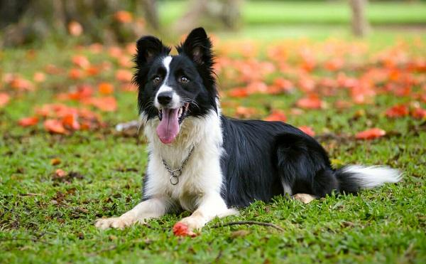 ამერიკელმა ბიზნესმენმა თავის ძაღლს 5 მლნ დოლარი უანდერძა