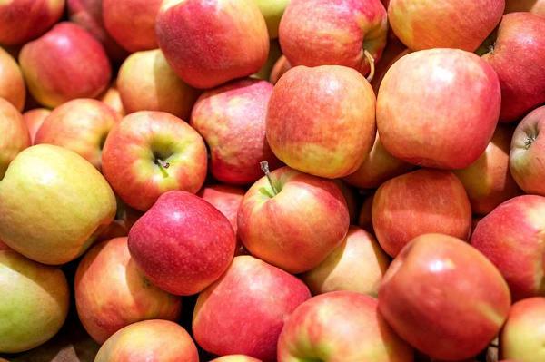 9 თებერვლამდე 11.2 ათასი ტონა ვაშლის ექსპორტი განხორციელდა