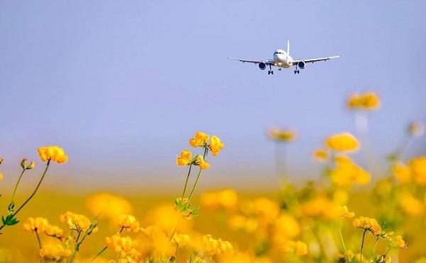 ვვარაუდობთ, რომ ზაფხულის სანავიგაციო სეზონზე პანდემიამდე არსებული მაჩვენებლების 40-45 % დაბრუნდება - აეროპორტების გაერთიანება