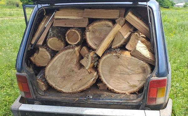 ქვემო ქართლში უკანონო ტყითსარგებლობის 5 ფაქტი გამოავლინეს
