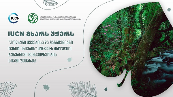 """ბუნების დაცვის საერთაშორისო კავშირმა """"კოლხური ტყეებისა და ჭარბტენიანი ტერიტორიების"""" UNESCO-ს მსოფლიო მემკვიდრეობის სიაში შეტანას მხარი დაუჭირა!"""