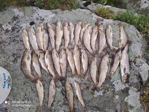ქვემო ქართლში უკანონო თევზჭერის 10 ფაქტი გამოავლინეს