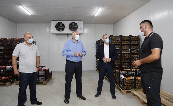 ახლადგახსნილი სამაცივრე მეურნეობიდან 800 ტონა მოსავლის რეალიზაცია უკვე განხორციელდა