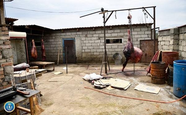 თბილისში ცხენისა და ვირის ხორცს საქონლის ხორცის სახით ყიდდნენ - დაკავებულია 2 პირი