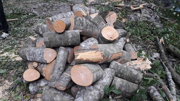 დუშეთში  ხე-ტყის უკანონო მოპოვების ფაქტი გამოავლინეს