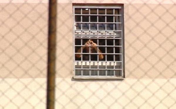 მიხეილ სააკაშვილი რუსთავის ციხის საკნიდან მხარდამჭერებს მიესალმა